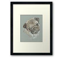 Pug dog pastel portrait Framed Print