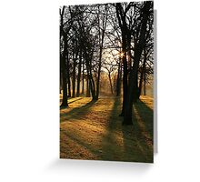 Sunlight thru the trees. Greeting Card