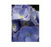 Lavender Blue Petals Art Print