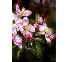 Michigan's Blooms  Photographic Print