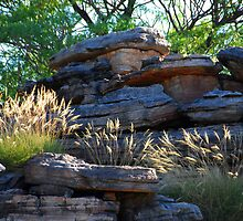 Grasses Stone Country Kakadu NT by iansimages