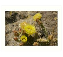 Prickly Pear Cactus Flower Art Print