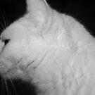 my ghost casper by donald beynon