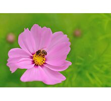 bee pink and green Photographic Print