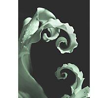 Final Twirl  Photographic Print