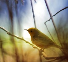 Yellow Warbler - Marsh Grass by Ryan Houston