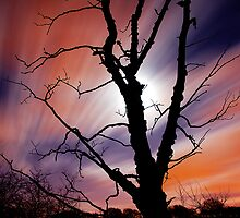 Dead Tree by DavidMuir