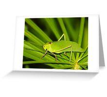 Grass Hopper  (Cuba) Greeting Card