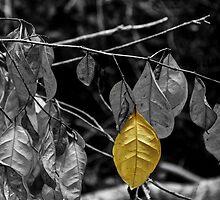 OneYellow Leaf by Deborah V Townsend