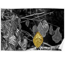 OneYellow Leaf Poster