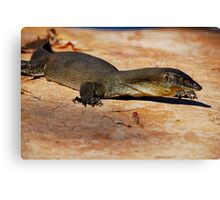 Merten's Water Monitor Canvas Print