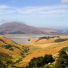 Otago Peninsula, New Zealand by Elana Bailey