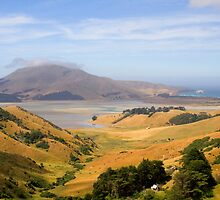 Otago Peninsula, New Zealand by Elana Bailey