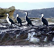 Cormorants - Spectacle Island, Dodges Ferry, Tasmania Photographic Print