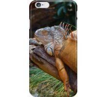 Iguana (Iguanidae) iPhone Case/Skin