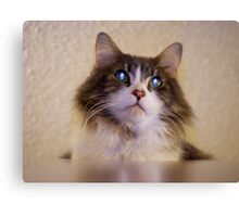 Kitty on top of the world Canvas Print