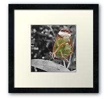Glasswing Framed Print