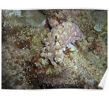 Curly the Nudi  Poster