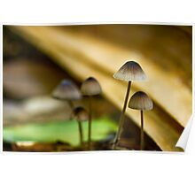 Rainforest Funghi Poster