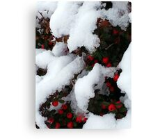 Red treasures under snow Canvas Print