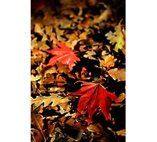 All Fall Down Photographic Print