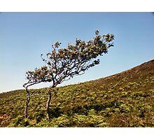 Wind Swept Photographic Print