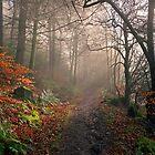 Footpath through Dodd Wood, Bassenthwaite by Martin Lawrence
