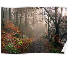 Footpath through Dodd Wood, Bassenthwaite Poster