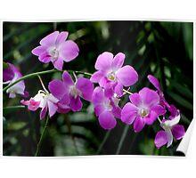 Deep Purple Orchids Poster