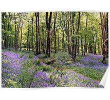 Bluebells at Whitemoss Common near Grasmere Poster