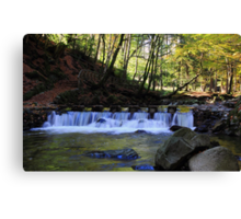 Small Steps In Tollymore Canvas Print