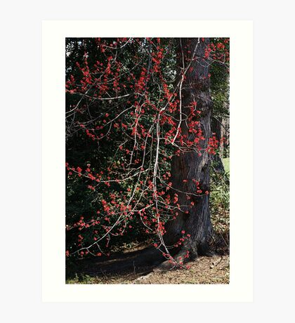 Blooming Maple Art Print