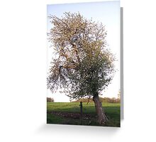 Leaning Apple Tree Greeting Card
