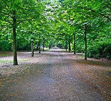 The Greeen Path by Randy Bynon