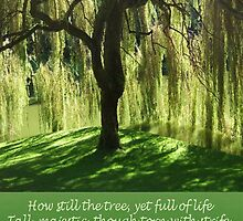How Still the Tree Photograph and Prose by taiche