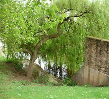 weeping willow by brucemlong