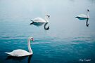 Swan Lake © by Mary Campbell