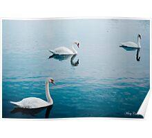 Swan Lake © Poster