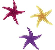 Purple, violet and yellow starfishes Photographic Print