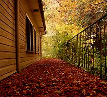 Leaf Littered Path by KeepsakesPhotography Michael Rowley