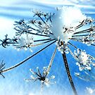 Frosted Beauty by ©The Creative  Minds