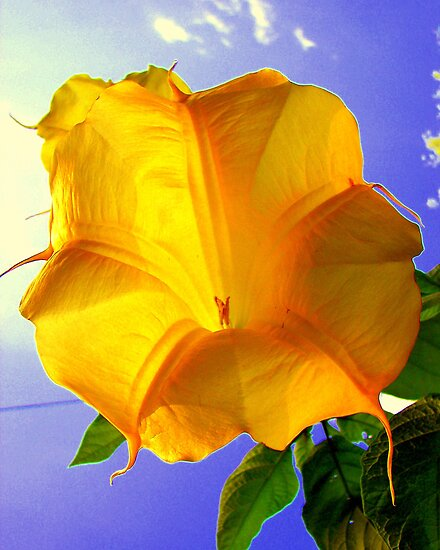 Trumpet Flower by buddykfa