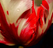 Red and White by Gaby Swanson