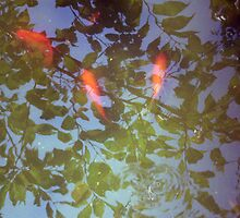Swimming in Leaves by Mui-Ling Teh