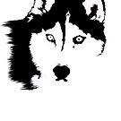 Black and White Husky by rmcbuckeye