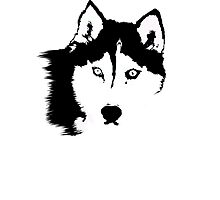 Black and White Husky Photographic Print