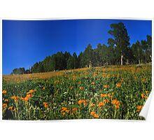 Painted Hillside Poster