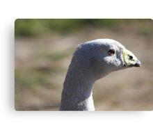 Cape Barren Goose Canvas Print