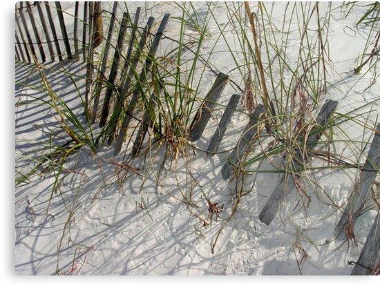 Dune Life by May Lattanzio