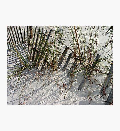 Dune Life Photographic Print